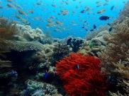 Scuba Diving Napantao