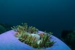 anemone house