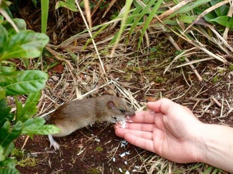 that cute little mice