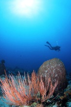 diving Maasim Reef