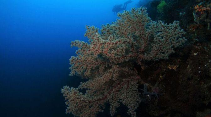 10th Reason why #SOXisNEXT? a Scuba Diving journey through Mindanao's Sarangani Bay