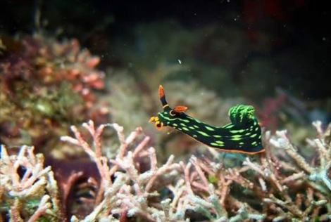 Sarangani Dive Safari