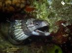 mooray eel hiding in a crevice