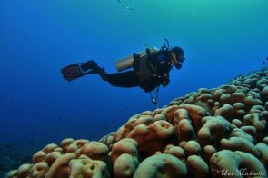 yours truly hovering over massive colonies of hard corals