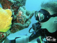 Cindy & the frogfish