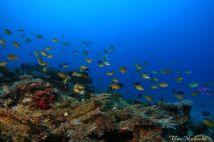 reef garden