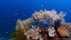 stunning corals