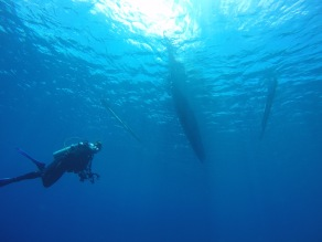 a diver and a boat