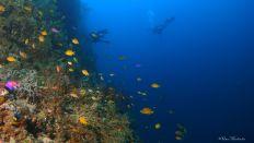 reef wall